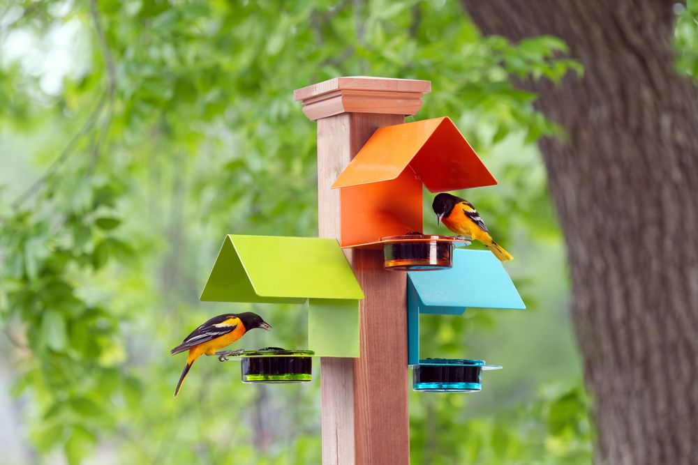 Couronne - M447-200 oriole feeders with 2 orioles MAS51504