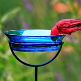 A red bird in a blue bird bath