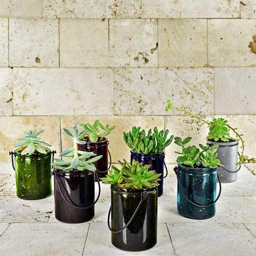 Seven jars with green plants.