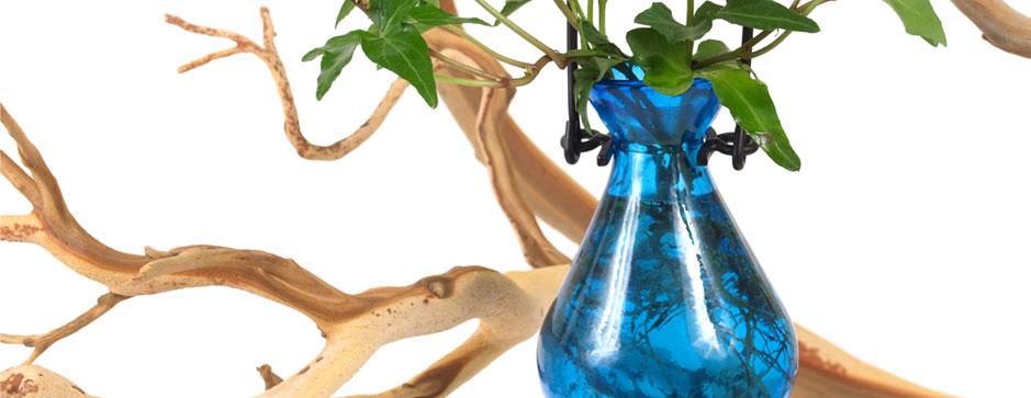 Rooting Vases