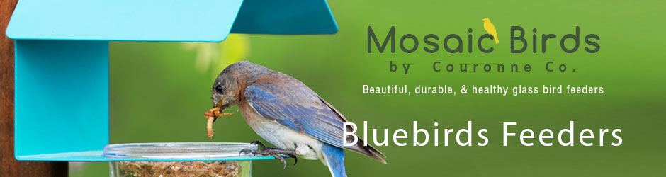 Bluebirds Feeders