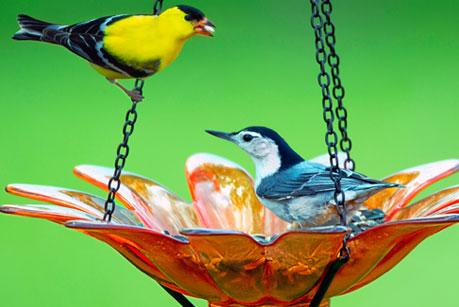 Specialty Bird Feeders