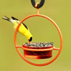 Mosaic Birds Hummble Bold Bird Feeder Orange