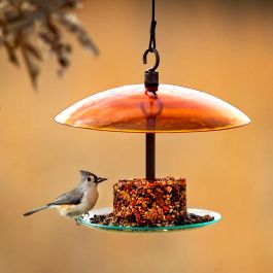 Mosaic Birds 360 Degree Petite Seed Cylinder Feeder - Orange