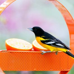 Mosaic Birds Bistro Bird Feeder Orange