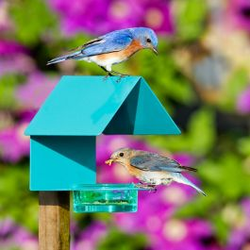 Mosaic Birds Cottage Bird Feeder Aqua